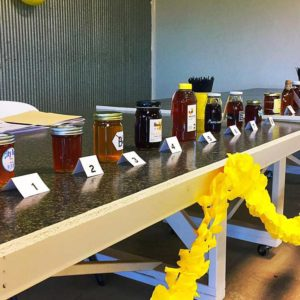 Row of bottled entries into the Honey Contest.