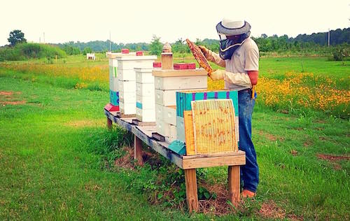 Jeremy Bemis giving a live demonstration at the Arkansas Honey Festival.
